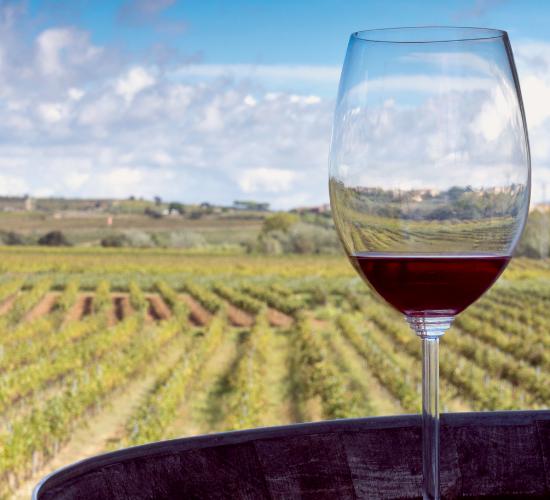 Blog - Imagenes - Laura viticulturist